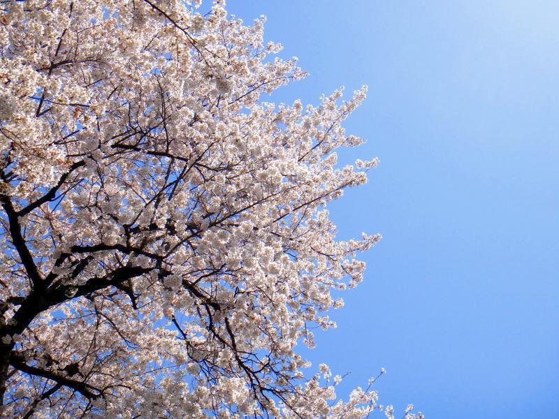 春の旅行&ビジネスに嬉しい特典付きプラン