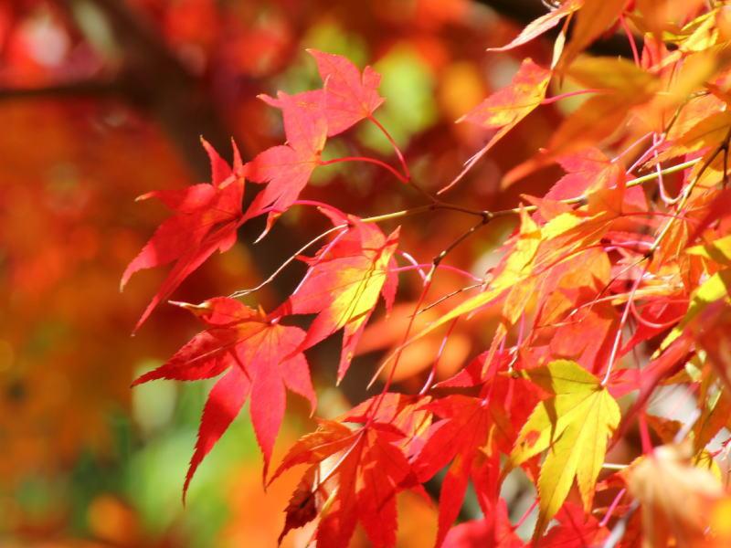 秋の旅行&ビジネスに嬉しい特典付きプラン