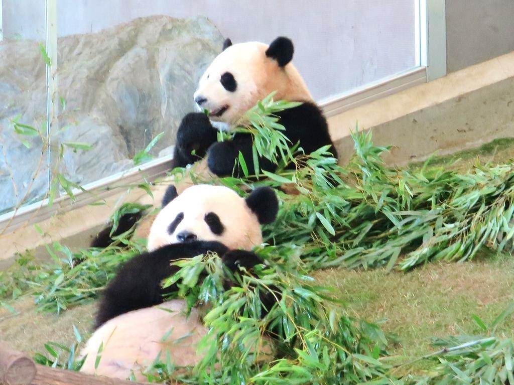 たくさんのパンダと動物たちとの出会い
