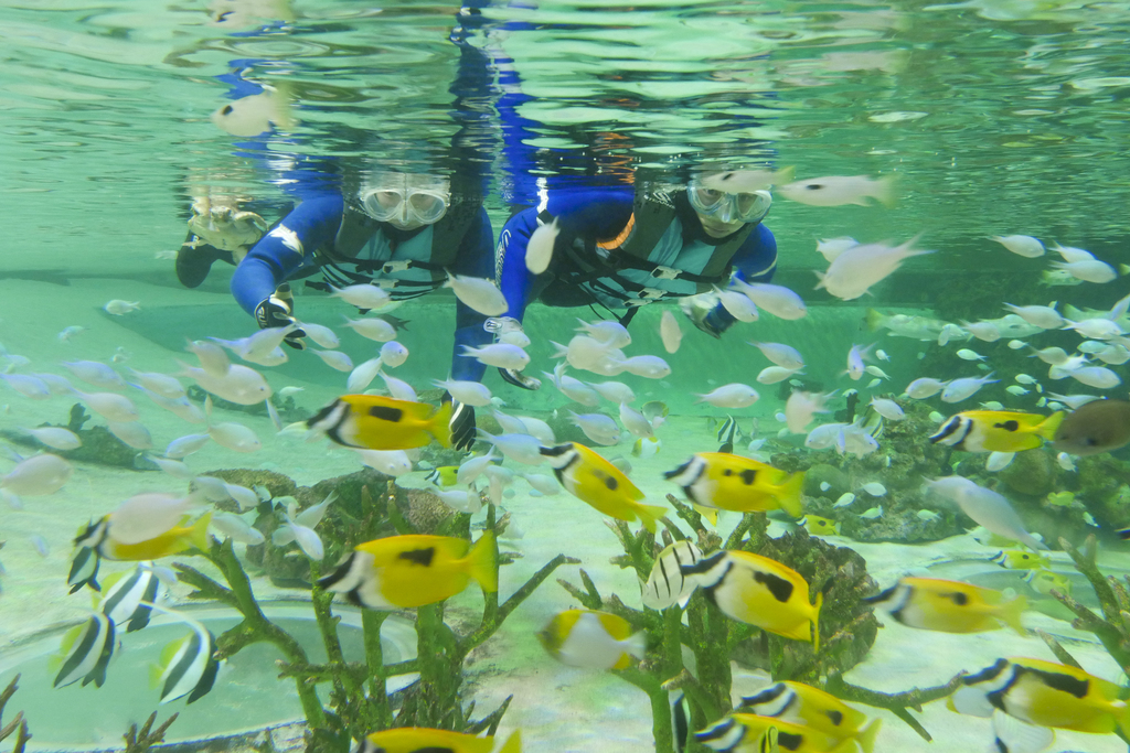 トロピカルアイランドの魚たちと水中散歩♪