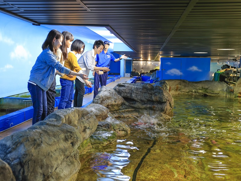 エコアクアロームで魚たちのお食事タイムのお手伝い