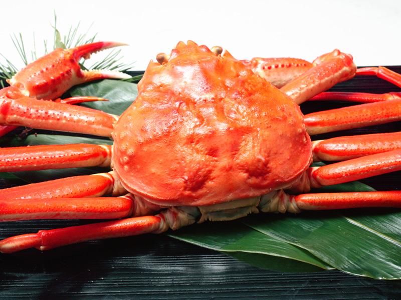 身がぎっしり★獲れたて浜茹でずわい蟹まるごと1杯