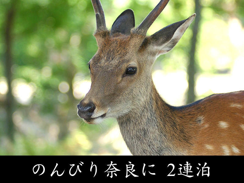 のんびり奈良に2連泊
