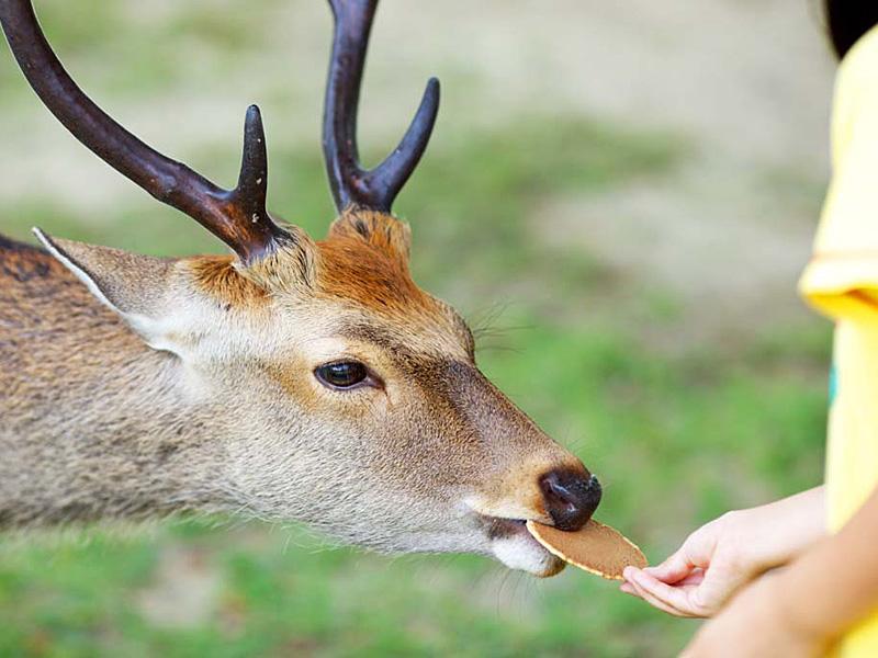 鹿せんべい イメージ