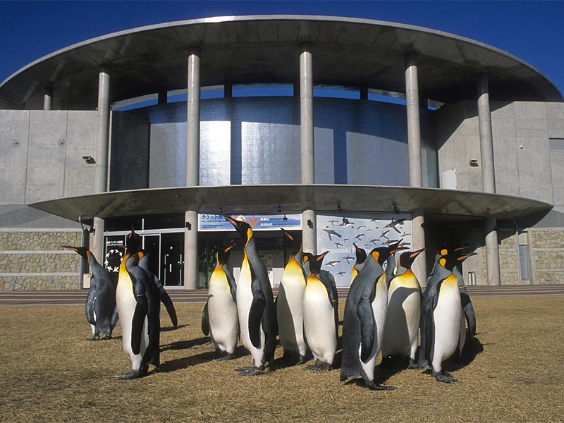 【長崎ペンギン水族館】 イメージ