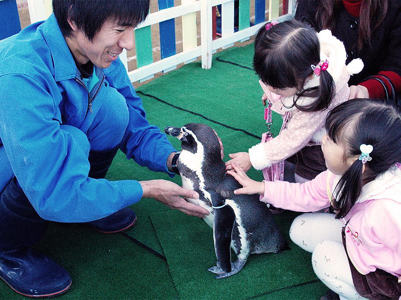 【長崎ペンギン水族館】 ペンギンと触れ合おう!