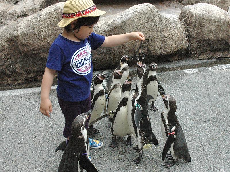 【長崎ペンギン水族館】 ペンギンさんと遊ぼう!