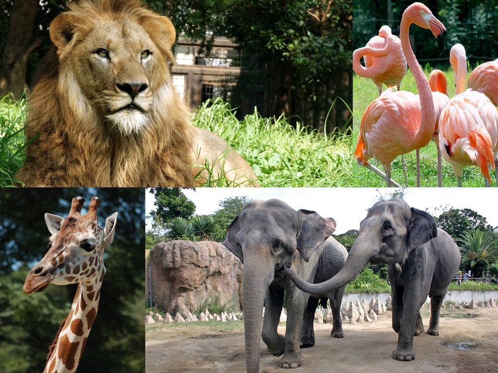 到津(いとうづ)の森公園 動物たち イメージ