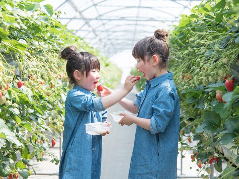 ★あま〜い旬のいちごを食べ放題♪はままつフルーツパーク(イメージ)