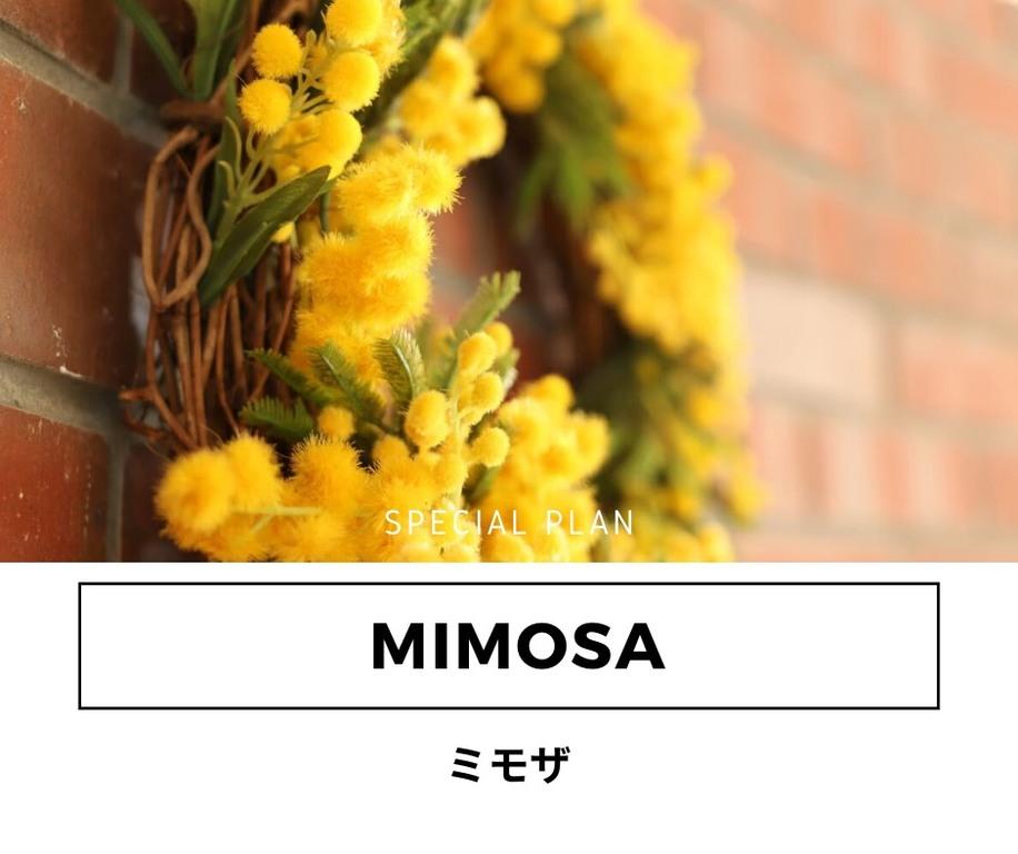 2.3月限定の特別MIMOSAプラン☆