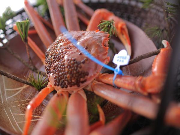 タグ付きの活きた松葉蟹をあつあつの蒸し蟹でご用意(お一人様半身) [一例]