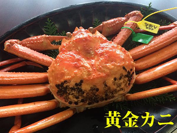 黄金ガニとは、数千匹に1匹しか取れない希少な幻の蟹と言われています