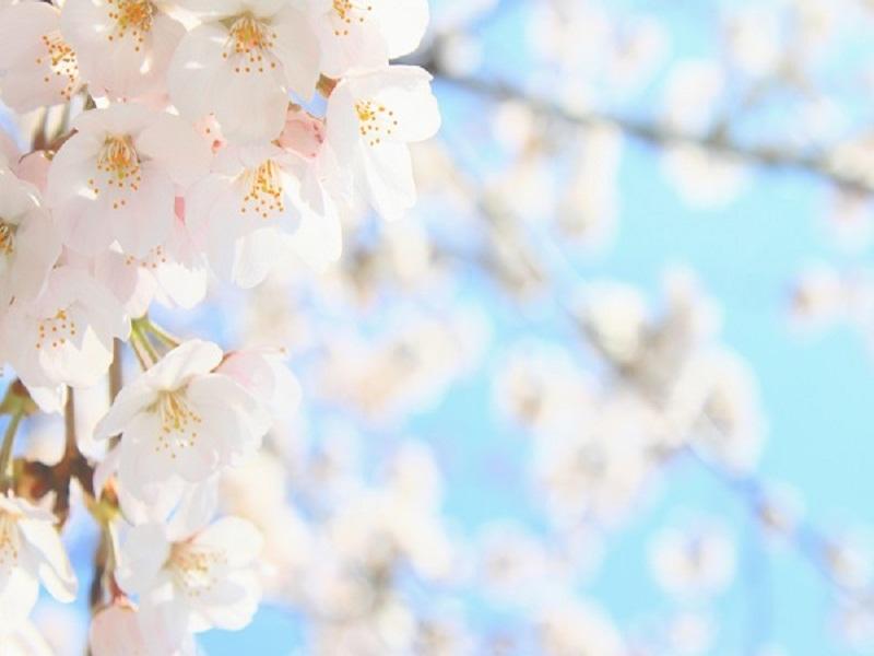 春旅は沖縄へ
