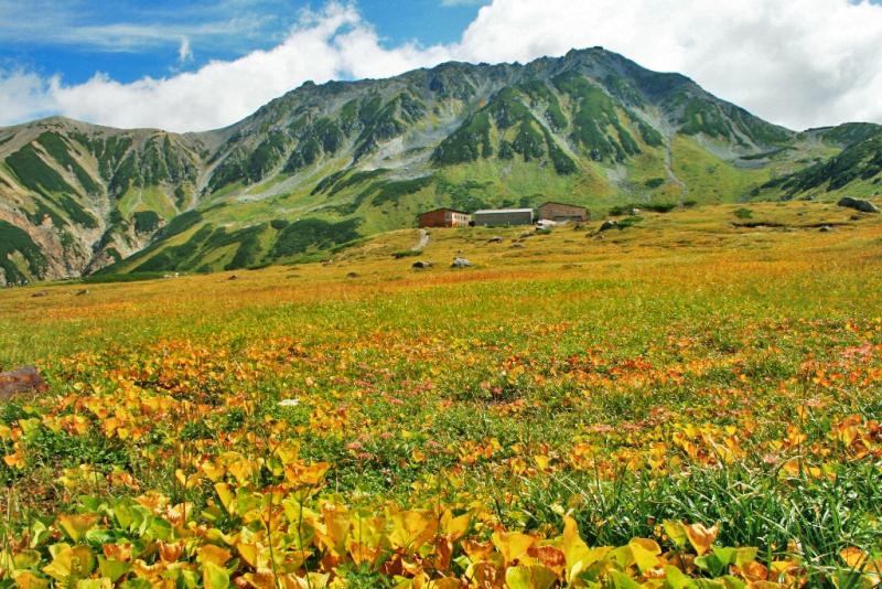 秋晴れに映えるイワイチョウの黄葉(イメージ)