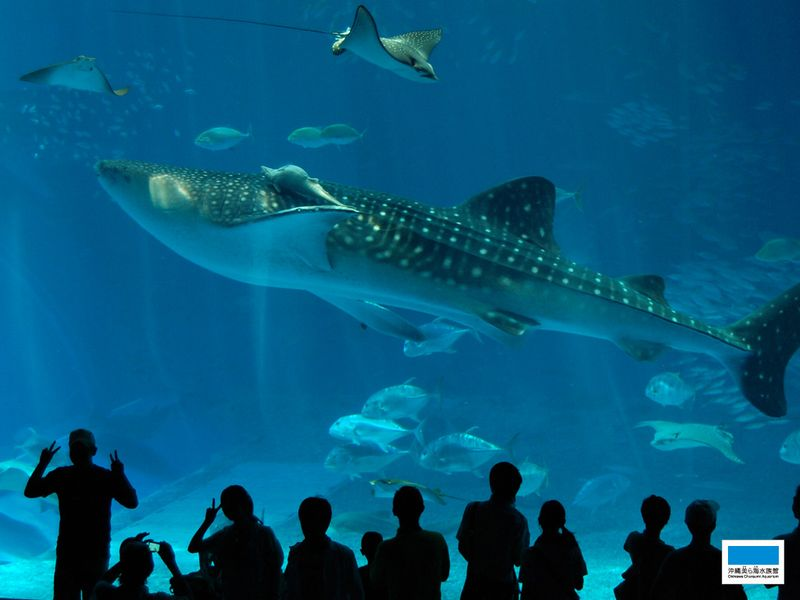 ホテルから車で5分!沖縄美ら海水族館♪