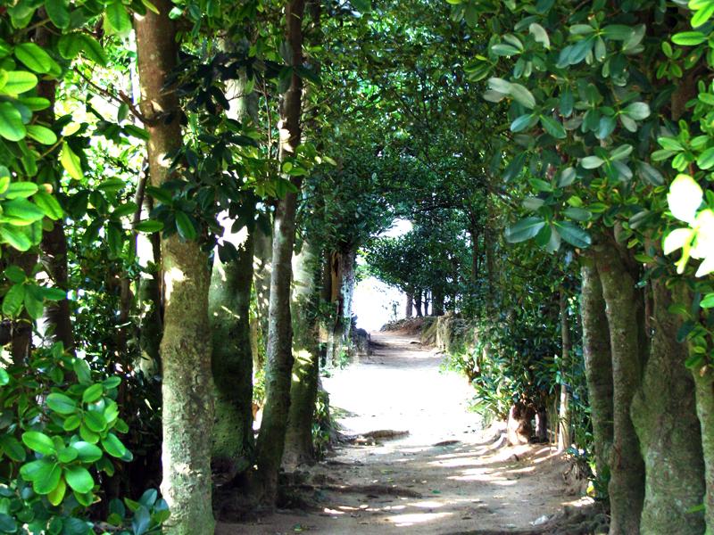 備瀬のフクギ並木まで徒歩15分♪