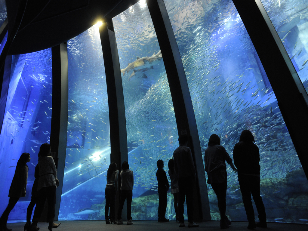 群れと輝きの魚たち(大水槽)