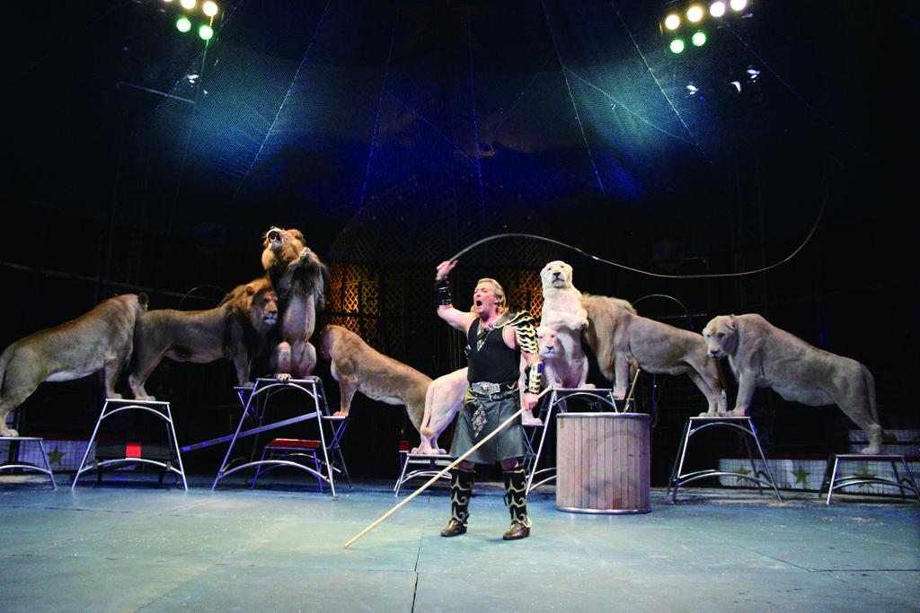 奇跡のホワイトライオン世界猛獣ショー(写真はイメージ)
