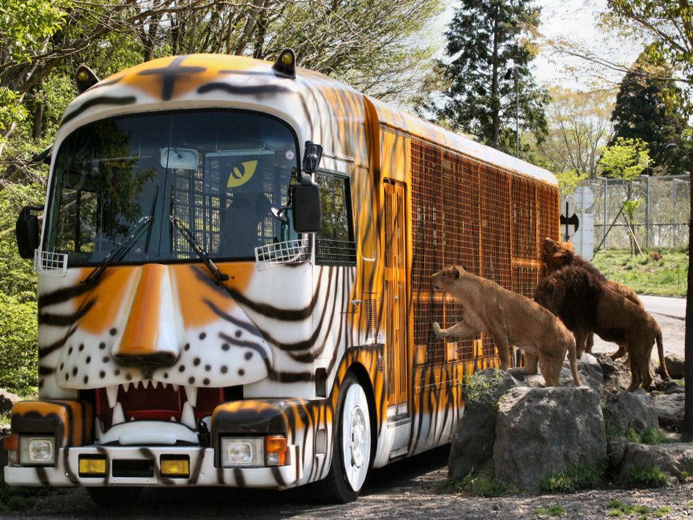 富士サファリパークの醍醐味は、動物との距離感