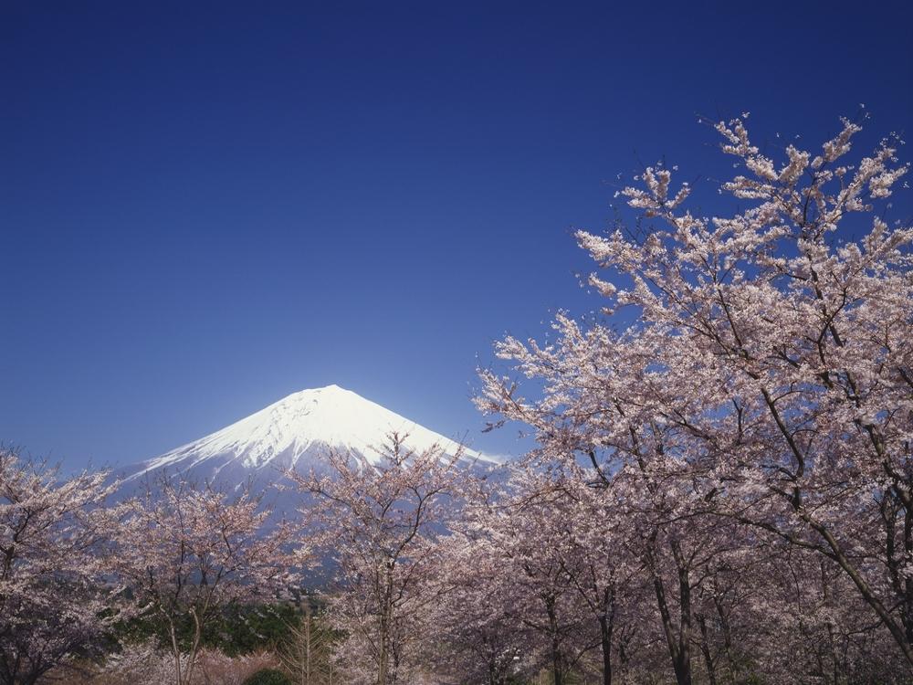 富士山〜春〜