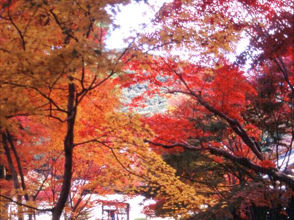 紅葉の『興生寺・琴坂』