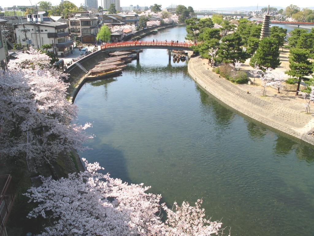 客室眺望(春の桜)