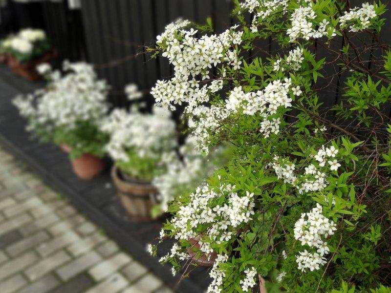 旧軽井沢(イメージ)
