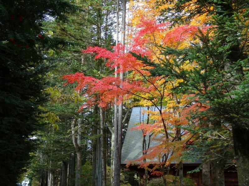 秋の軽井沢(イメージ)