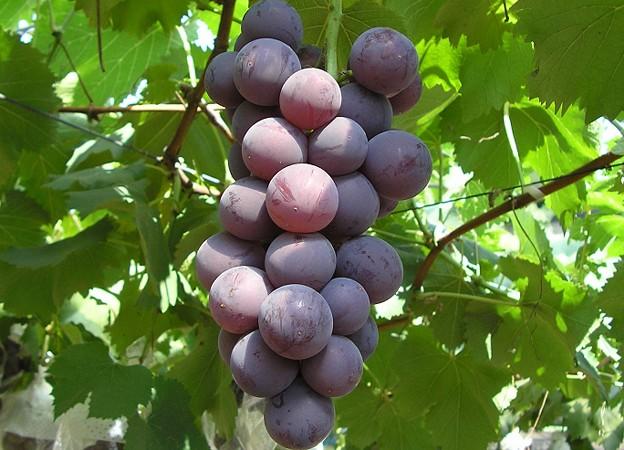 淡路島フルーツ農園は一年を通して味覚収穫体験を楽しめます