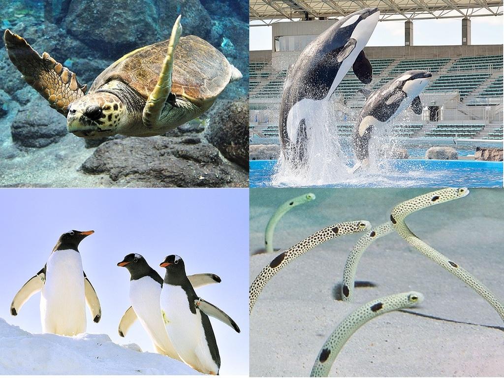 写真提供:名古屋港水族館