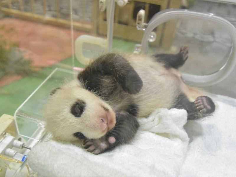 AWS 赤ちゃんパンダ