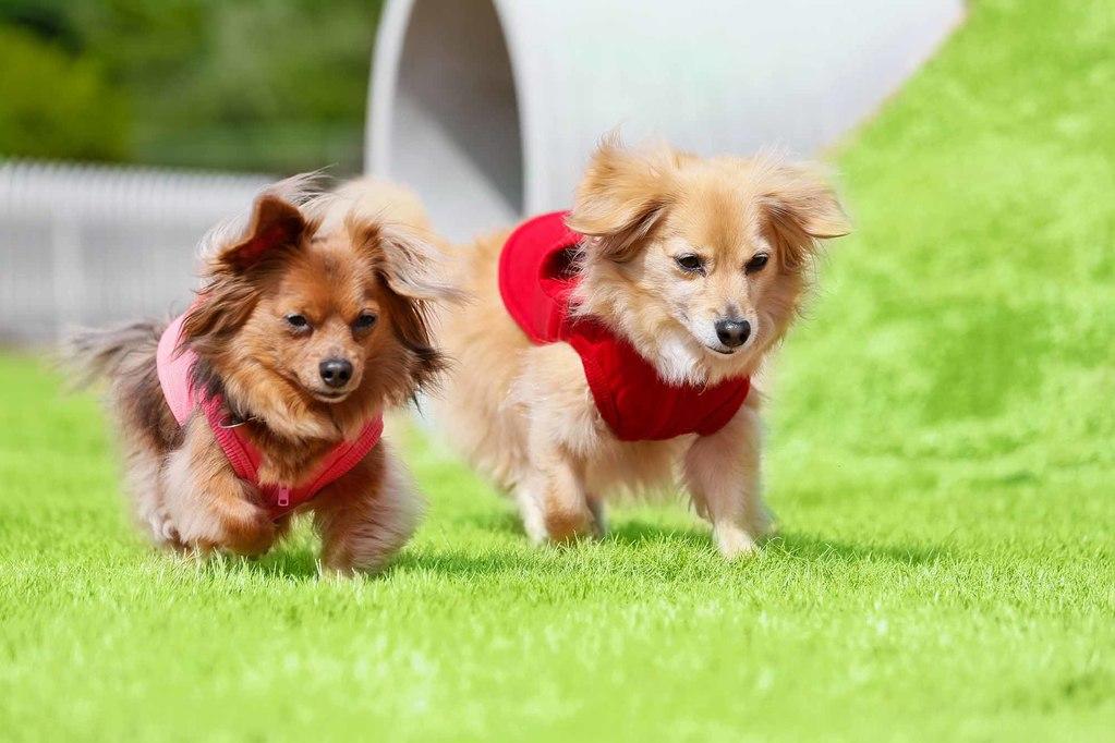 「デラックス」宿泊プラン<br>〜愛犬と優雅に、時を忘れて〜