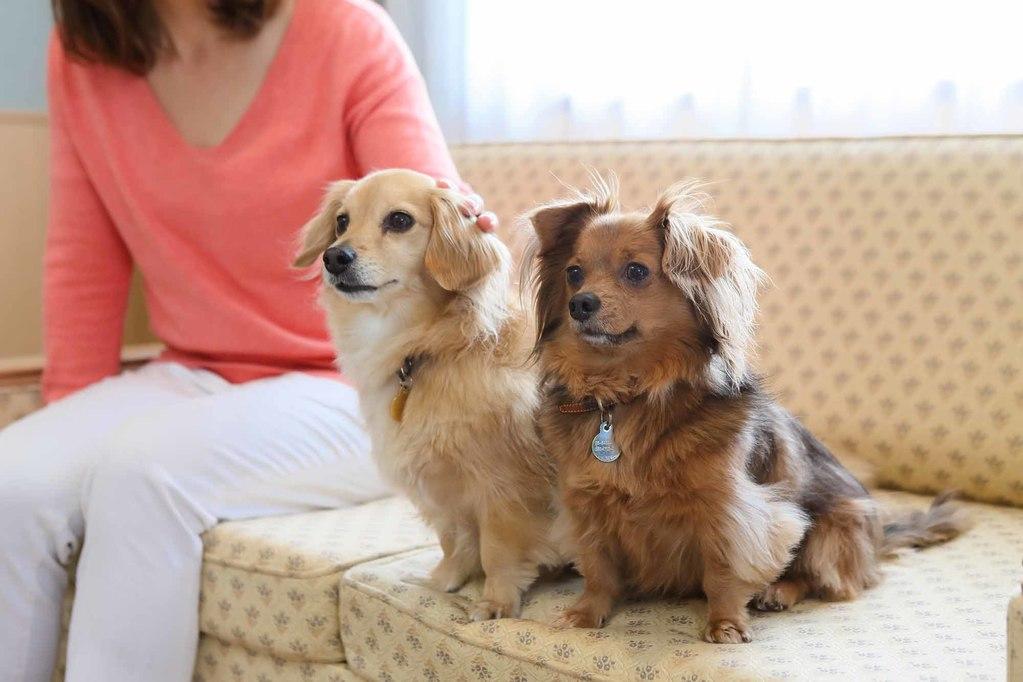 「スタンダード」宿泊プラン<br>〜愛犬とプライベートリゾートを〜