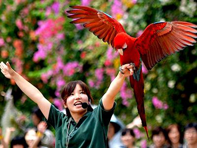 神戸どうぶつ王国はどうぶつたちの憩いの広場。雀などの野鳥も…