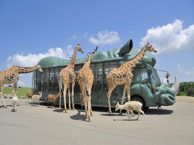 アフリカンサファリ(ジャングルバスとキリン)