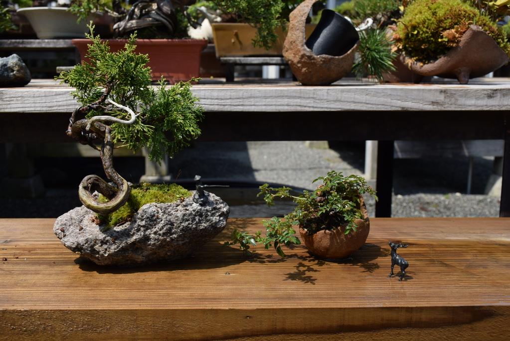 手作り盆栽