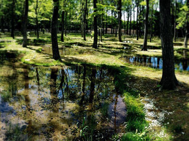 ボタニカルガーデン「水庭」
