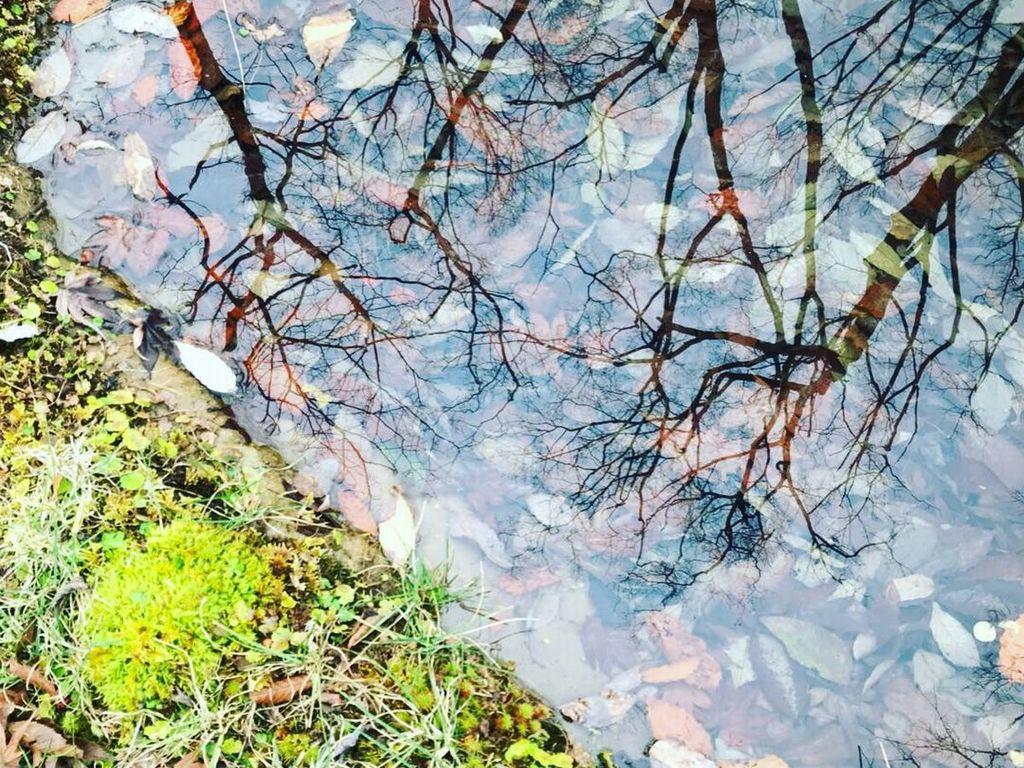 冬の「水庭」