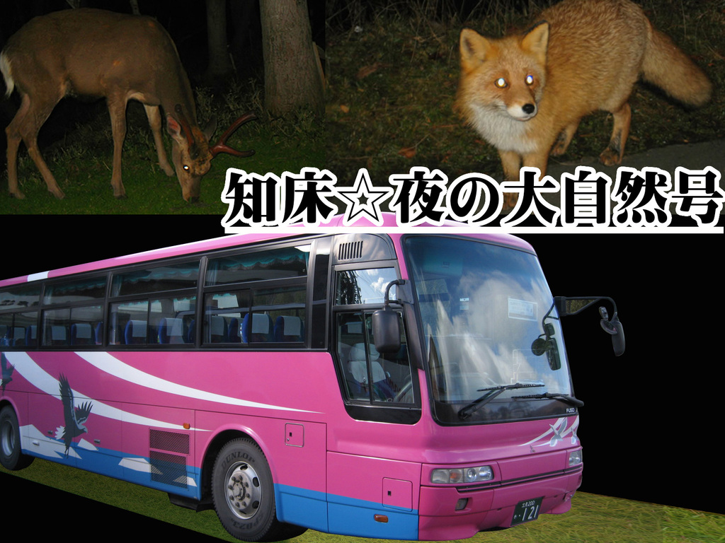 知床☆夜の大自然号