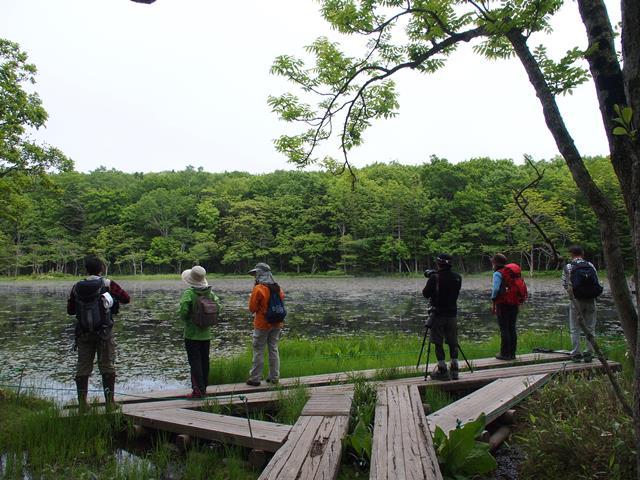 知床五湖ガイドツアーイメージ。湖には水鳥が見られることも。