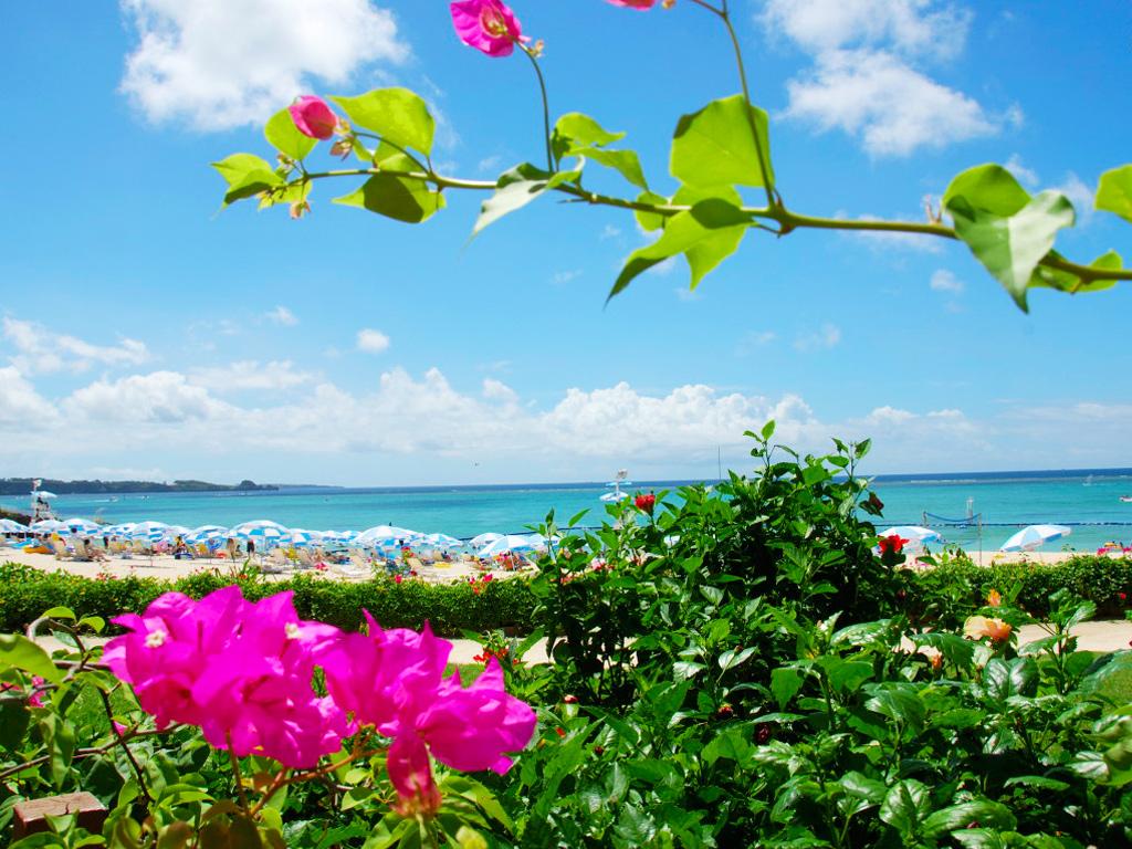 ブーゲンビリア越しのムーンビーチ