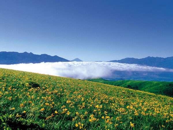 ニッコウキスゲと富士山、夏の車山高原。