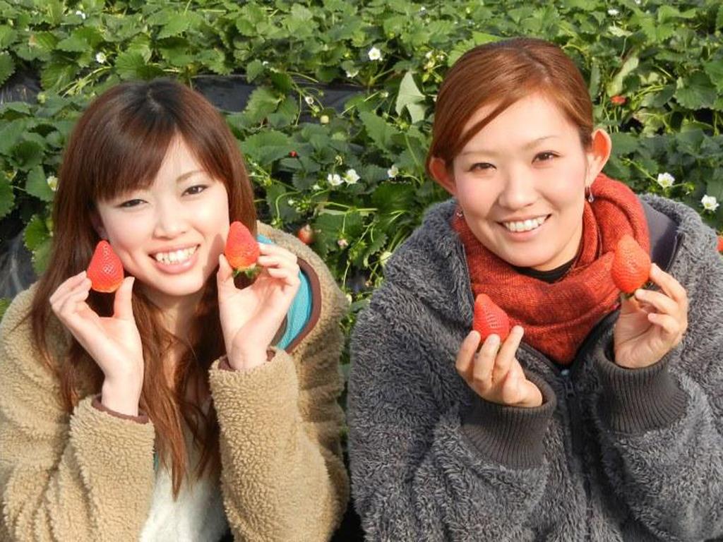 原田農園で春のいちご狩り♪粒の大きいイチゴは30分食べ放題です。