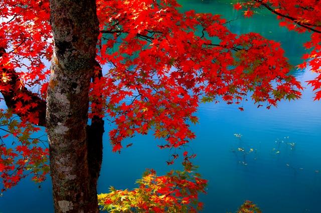 深紅に染まる紅葉と神秘的に輝く五色沼