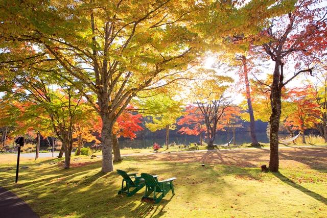 陽光を受けて輝く紅葉の美しさに、目をうばわれることでしょう