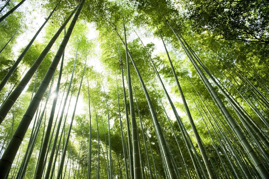 竹林の小径へは徒歩10分