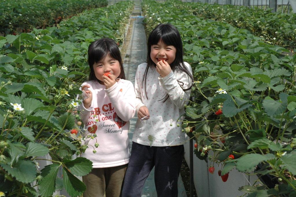 阿蘇の美味しいイチゴ