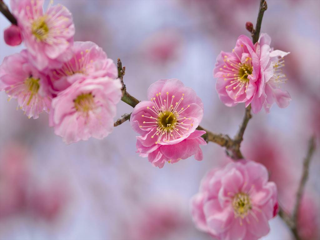 大切な方の人生の節目をご家族でお祝いする春の特別プランです。