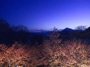 敷地内には桜があり、夜桜もお楽しみ頂けます