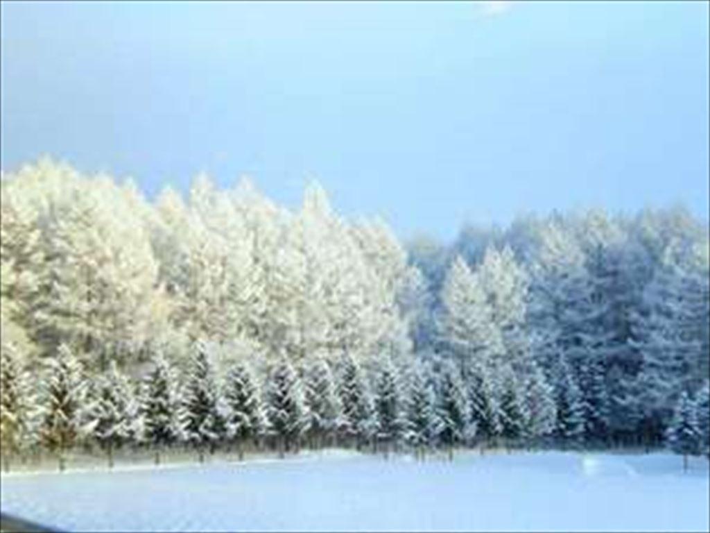 眺めていると心まで澄み渡りそうな真っ白な銀世界